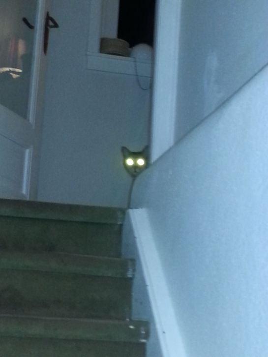 Merlin-Katze