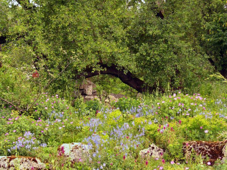 Botanischer Garten Ffm - CL2015-a - s