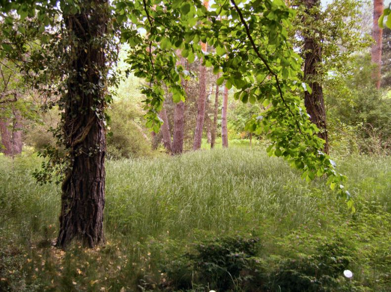 Botanischer Garten Ffm - CL2015-b - s