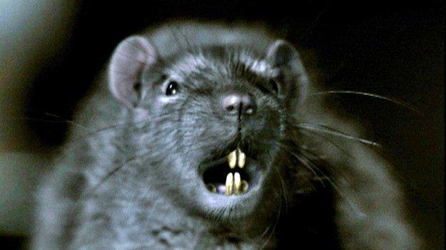 Von Meerschweinchen und Ratten, von Katzen und Mäusen | psychosputnik
